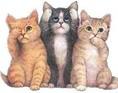 Postkort med hunde og katte